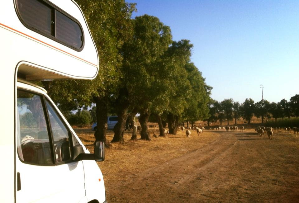 moutons-visiter-portugal-camping-car
